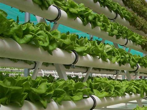 gardening hydroponics ã learn the amazing of growing fruits books hydroponics lowimpact orglow impact living info