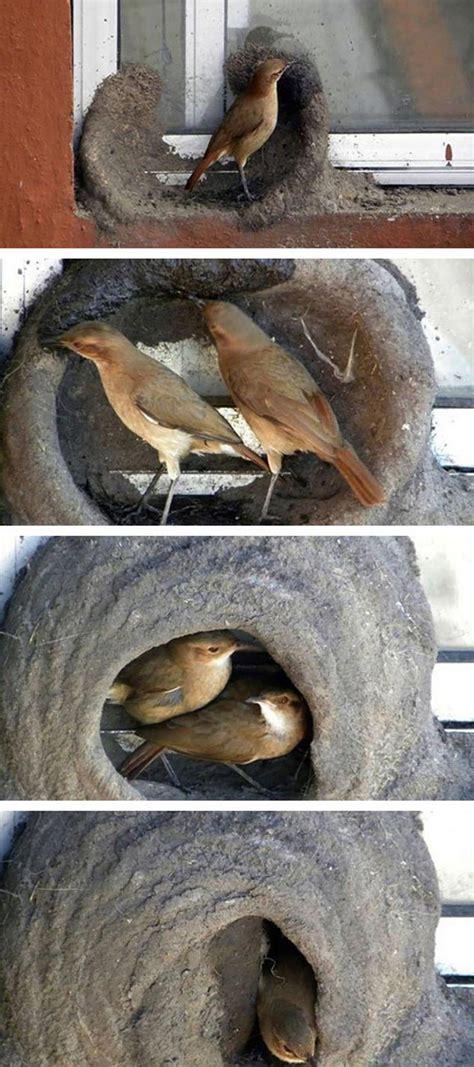 20 unusual bird nests built in the weirdest placesonemorepost
