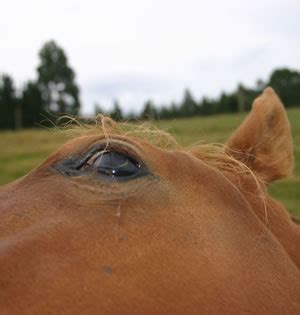 are horses color blind vision likened to that of colour blind