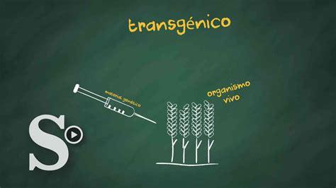 alimentos transgenicos alimentos transg 233 nicos 218 ltimas noticias de alimentos