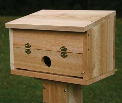 winter roosting box winter bird house bird feeding and