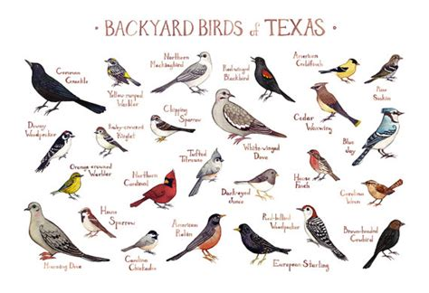 backyard bird identification chart free pictures of texas birds porn website name