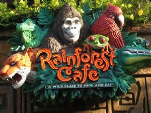 What Plants Grow In The Tropical Rainforest - downtown disney rainforest cafe