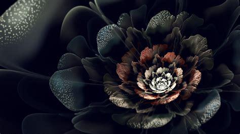 black rose wallpaper hd pixelstalknet