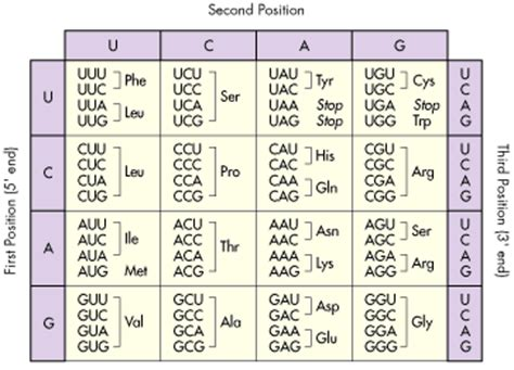 amino acid table openstudy
