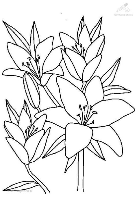 Free Plants Of The Grassland Coloring Pages Coloring Pages Plants