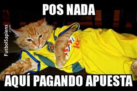 Memes Pumas - memes de america vs pumas gato 2 jpg 625 215 417 quotes