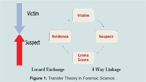 definition of pattern evidence avens publishing group forensic evidence and crime scene