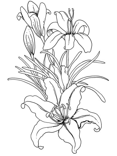 coloring pages printables flowers for adults flower coloring pages coloring home