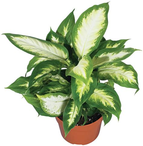 the home depot bring green indoors with 5 easy