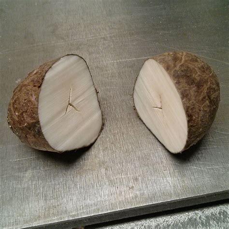 tagua nut tagua nut the wood database lumber identification