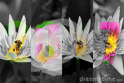 new year lotus flower happy new year 2017 in lotus flower theme stock photo