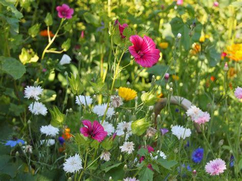 Wilde Pilze Im Garten by Meine Quot Wilde Ecke Quot Im Garten Hier Habe Ich Im Fr 252 Hjahr