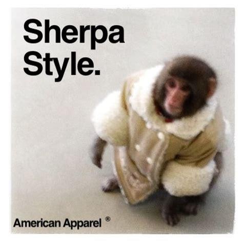 Ikea Monkey Meme - ikea monkey meme continues 35 pics
