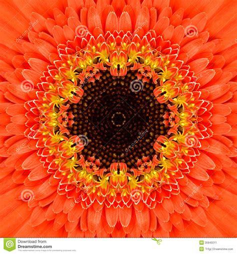 design flower center orange concentric flower center mandala kaleidoscopic