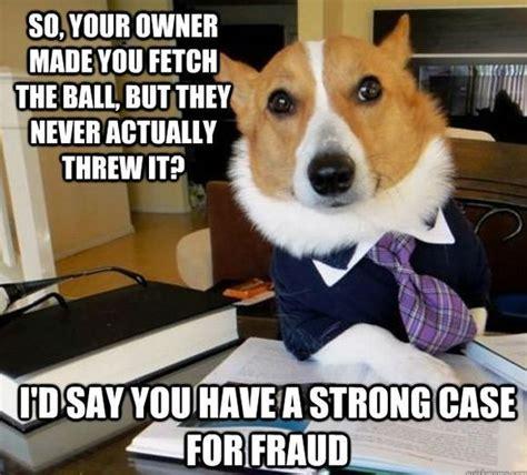 Lawyer Dog Memes - wordless wednesday great dog memes grouchy puppy 174 blog