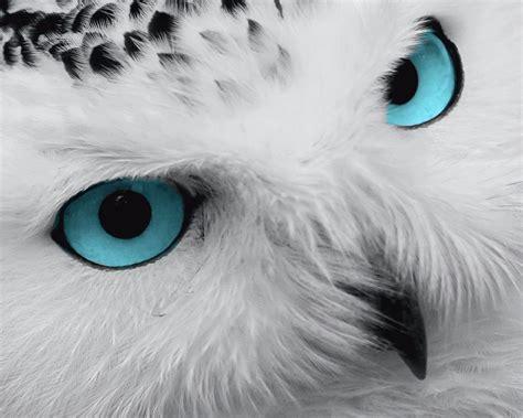 Piyama Owl Blue Piyama Owl teal white gray wall photo print owl blue bird decorative home decor ebay