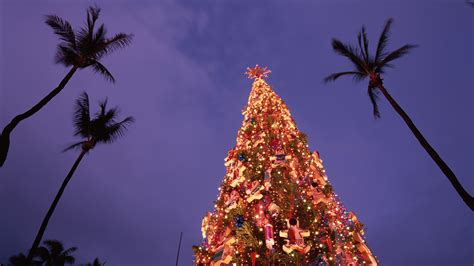 gallery of christmas trees oahu perfect homes interior