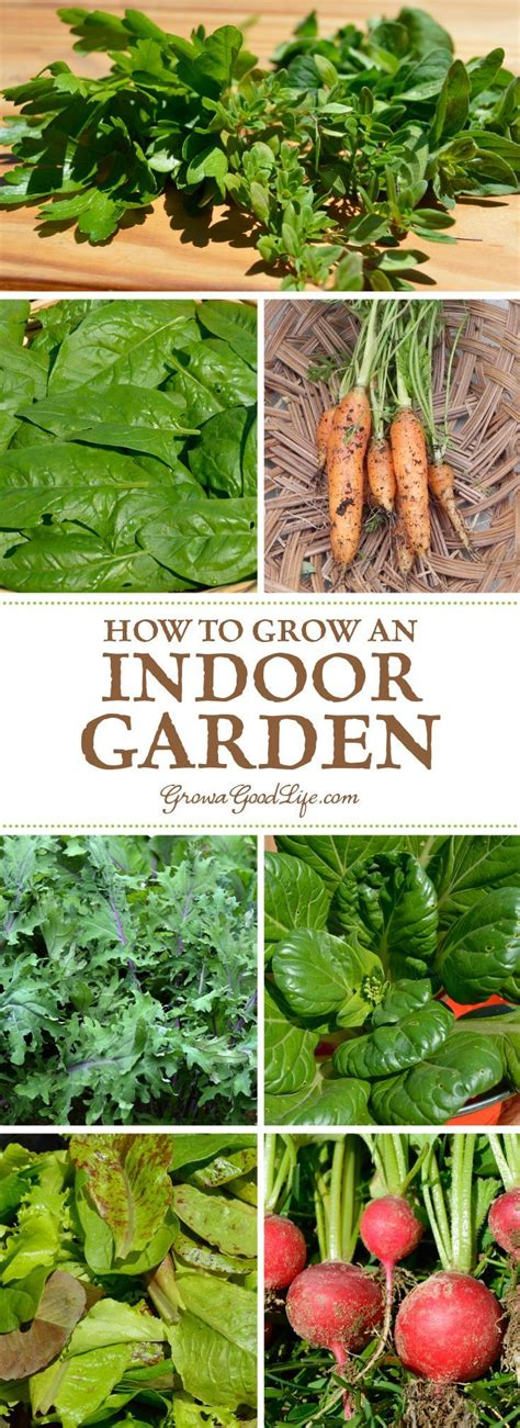 growing plants indoors without artificial light 1000 images about gardening and landscaping on pinterest