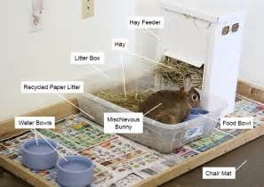 preparing for your house rabbit my house rabbit