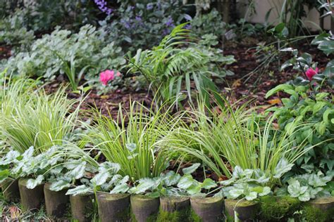 border plants by the gardening blog