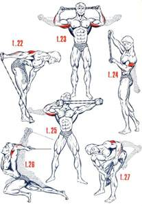 1000 id 233 es sur le th 232 me musculation pectoraux sur