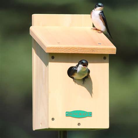 swallow bird house plans barn swallow birdhouse plans