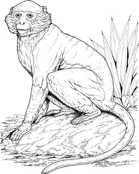 howler monkey coloring page free coloring pages