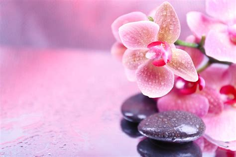 spa fiori spa stones droplets flower orchid spa stones droplets