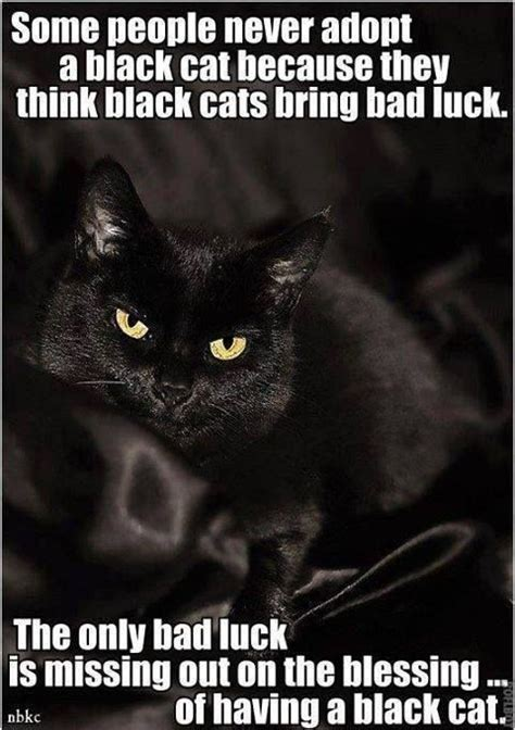 what color lighter is bad luck 248 best images about or cats other animals