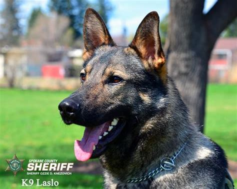 Spokane County Birth Records Spokane County Deputy Shoots Attacking Him And K9 Laslo The Spokesman Review