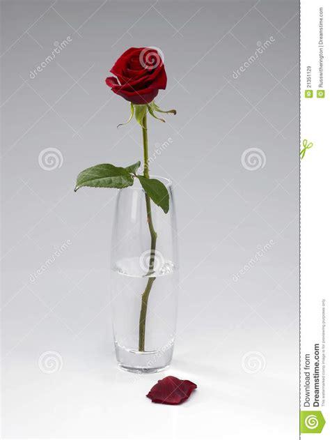 Single Stem Vase Choisissez Rose Dans Le Vase Images Libres De Droits