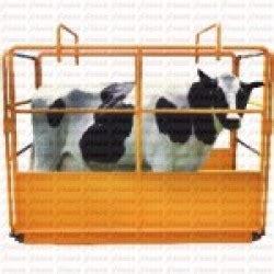 Timbangan Pakan Ternak untung menggunakan timbangan hewan