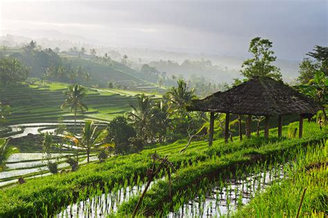 Detox Bali Indonesia by Top 5 Detox Retreats In Asia