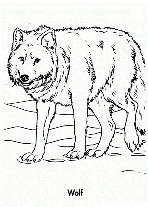 printable wolf coloring pages  kids print outs wolf colors animal coloring pages
