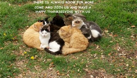 thanksgiving cats    ecards greeting cards