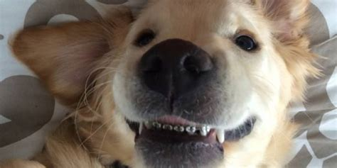 with braces puppy with braces looks thrilled to be his teeth straightened huffpost uk