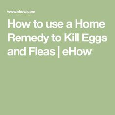 Home Remedies To Kill Fleas by 1000 Ideas About Home Remedies Fleas On Flea
