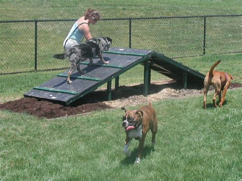 boarding places for dogs chester county pet boarding services parks jean gross realtor