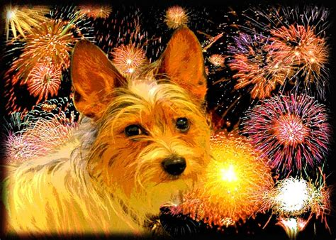dogs and fireworks dogs and fireworks tc