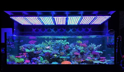 Led Aquarium Lighting atlantik v4 reef aquarium led lighting orphek aquarium