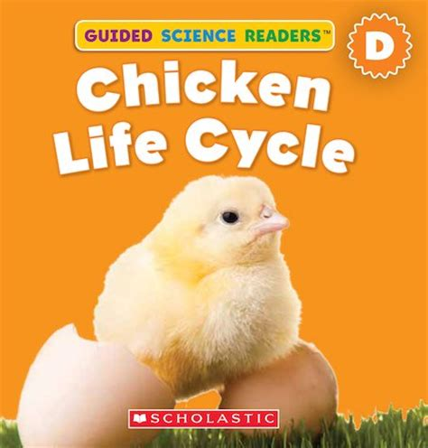 and chicken books chicken cycle books
