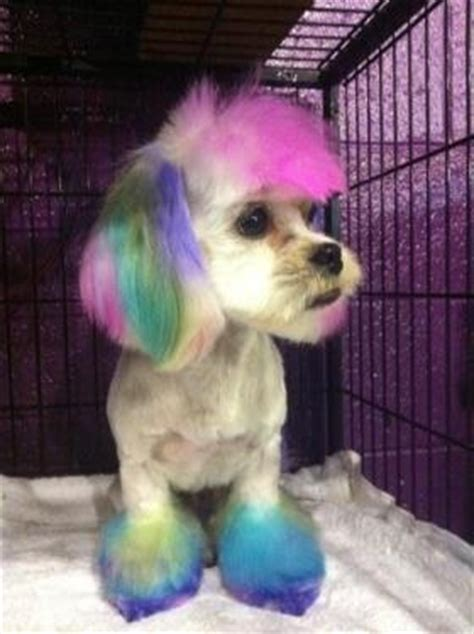 rainbow puppy 17 best images about rainbow animals on a unicorn puppys and kittens