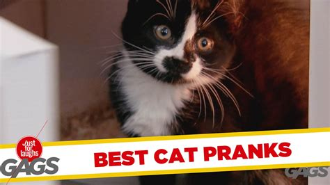 best of cat best cat pranks best of just for laughs gags