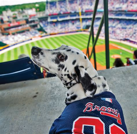 puppy atlanta 10 things to do in atlanta with your atlanta magazine