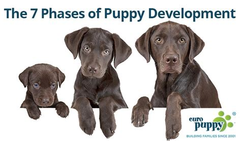 puppy development facts archives puppy