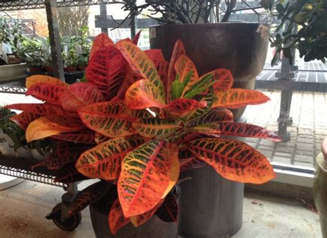 indoor plants no sun sprout home q a of the week all about houseplants huffpost