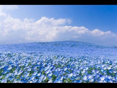 queneau i fiori primocapitolo i fiori raymond queneau