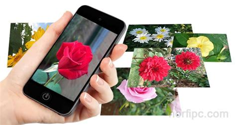 imagenes varias para celular gratis fotos de flores y rosas para fondo de pantalla del celular