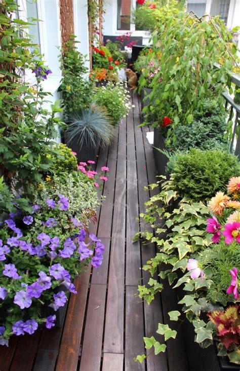 iper i giardini sole orto sul balcone donnad